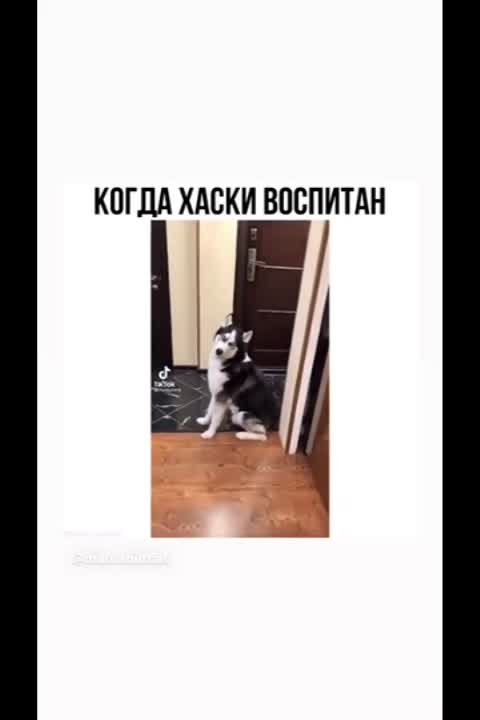 id1304701's Video 163821802588